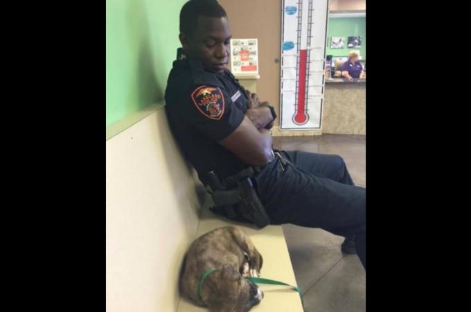 迷子の子犬を保護した警察官。その行動に多くの称賛の声