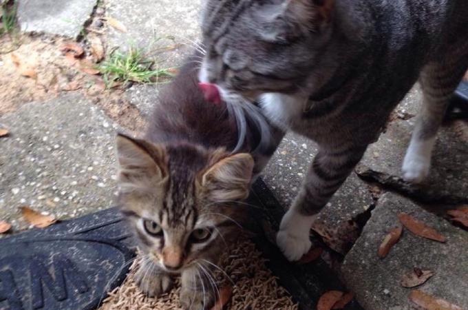 もともと捨て猫だったストライダーが家に持ち帰ったもの。それは小さな命でした
