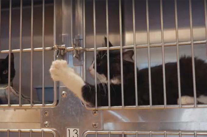 殺処分寸前の猫たちを救う「ファーム・リビング」。これまでに1700匹以上の猫たちを救う