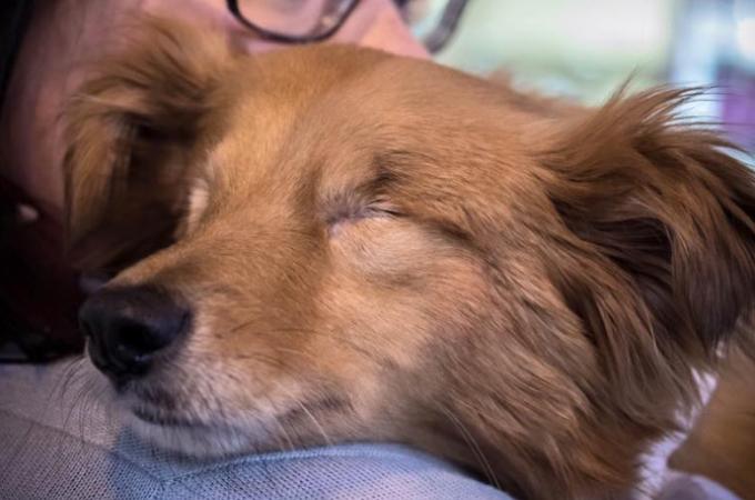 動物を保護するはずのシェルターで虐待され両目を失った犬