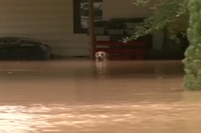 洪水の中、鎖に繋がれ身動きが取れず、取り残された1匹の犬の救出とその後