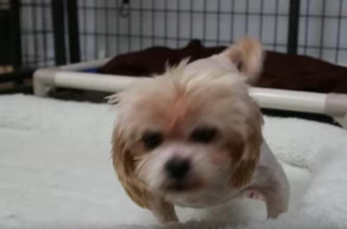 【動画】パピーミルとして9年間檻の中だった1匹の犬がふかふかのベッドを体験