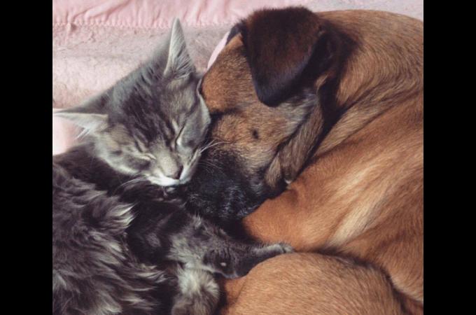 てんかんの病気と闘う犬をそばで寄り添い、サポートする猫