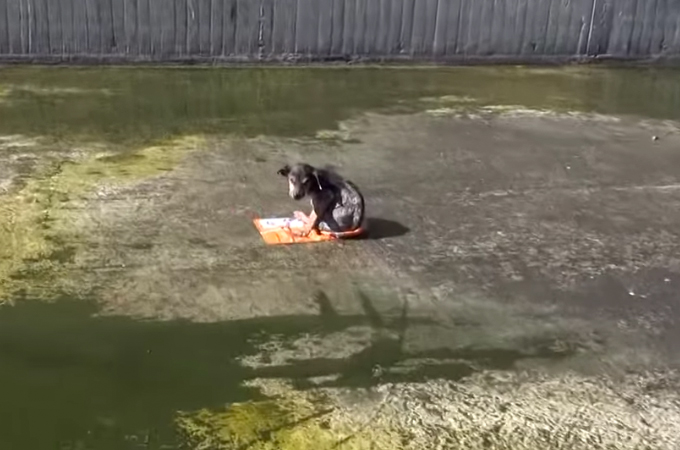 ひどい虐待をうけ、10mもの高さから川へ捨てられた子犬が救出される