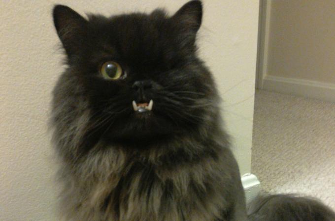 病気が原因で獣医に安楽死を選択する飼い主。獣医が猫を引き取ったその後の生活