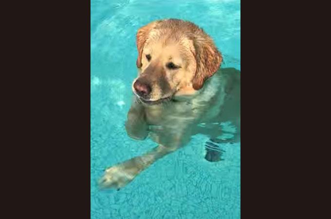 【動画】プールを楽しげに泳ぐ1匹のワンコ。そのプールが浅かったとわかった瞬間!