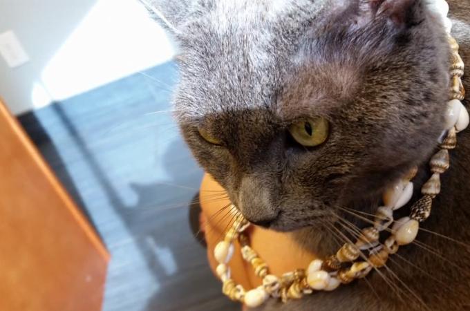 段ボールの中に紛れ込み、発見されないまま36日を過ごした猫。無事一命を取り留める