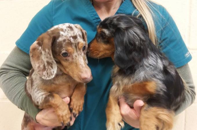 飼い主に捨てられた2匹のダックスフント。目が見えないオス犬に寄り添うメス犬の姿とその後