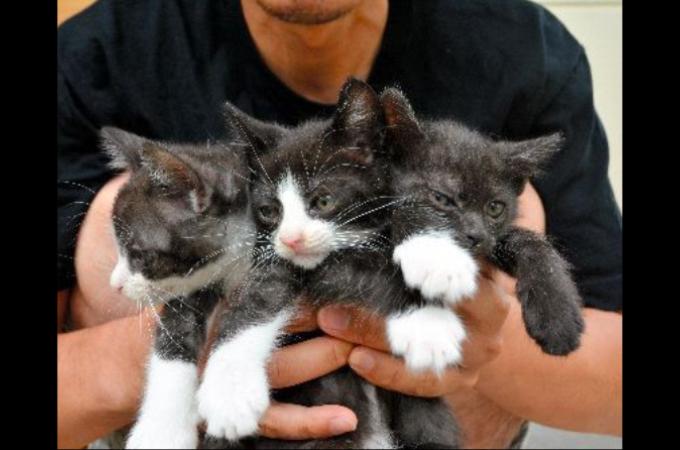 子猫3匹、神社に置き去り NGOが警察に告発 「命軽視している」