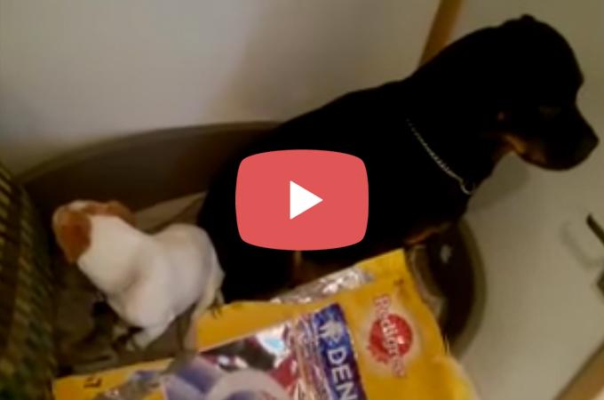 【動画】絶対に口をわるな!おやつを食べたのを問い詰められ2匹のとった行動とは