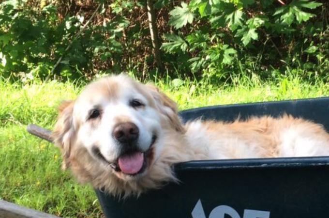 老犬で足腰が弱ってきたけど、散歩をさせてあげたい!飼い主が思いついた提案とは