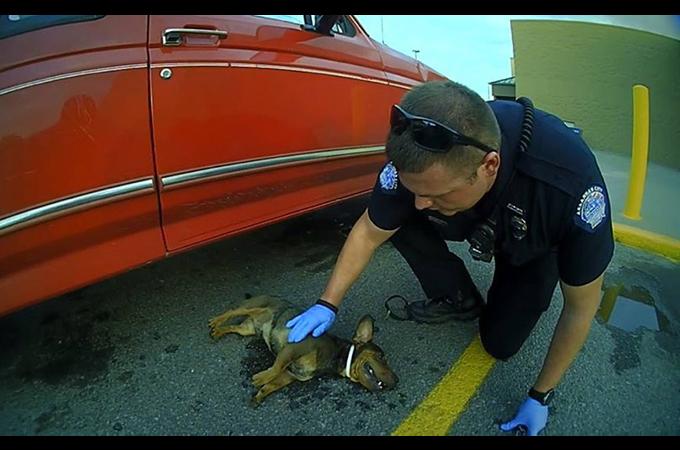 虐待か事故か?駐車場に停められた車の窓から首吊り状態で発見された犬