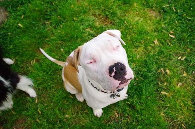 ひき逃げに合い失明、ケガの治療費が払えないと飼い主に捨てられた犬