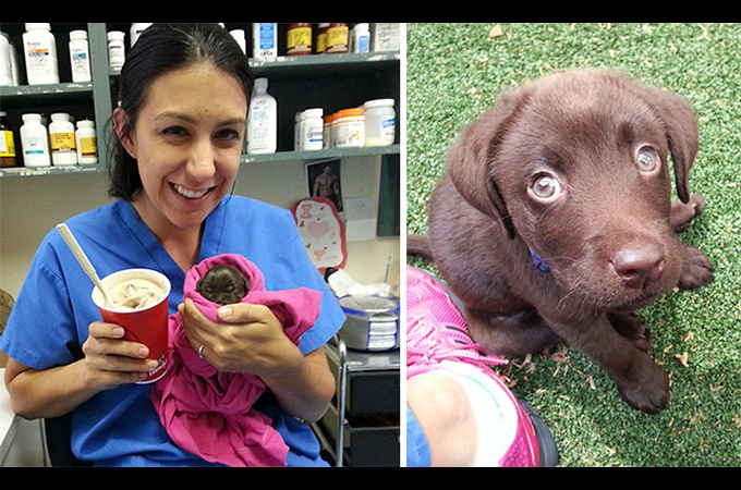 口蓋裂を持って生まれた子犬、飼い主の安楽死の選択から救い出した獣医