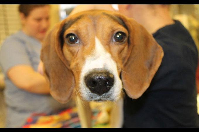 虐待と言う過去を持ちながら愛と希望を失わなかった1匹の犬の姿に感動