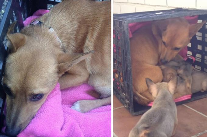 病気の治療のため離れ離れとなっていた犬の親子の心温まる再会の瞬間