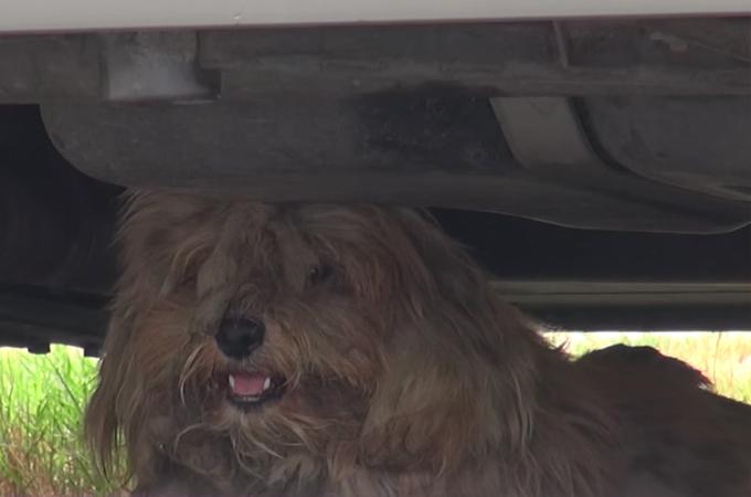 人間に警戒し路上生活する犬を保護。その後、見違えるほど綺麗な姿に