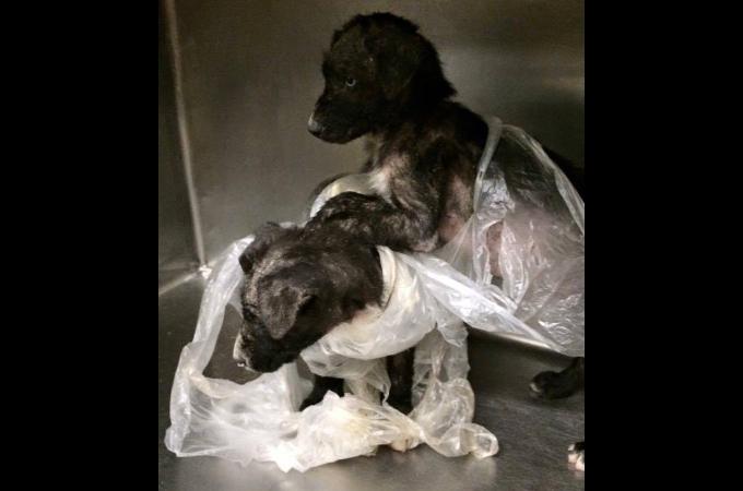 ゴミ袋に入れらた2匹の子犬。空腹からゴミや石を食べていたことが判明。保護されたその後の生活
