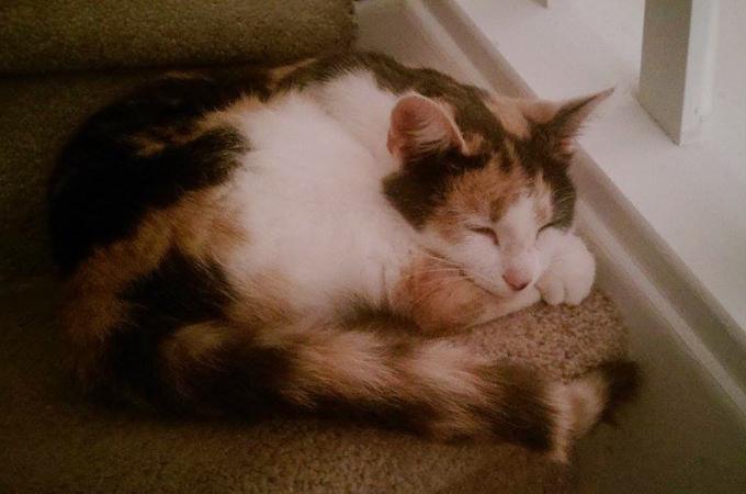 毎日家に来る野良猫を家族へと招き入れた一家。その後、一家に訪れた転機とは