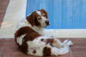 【画像】真夏の暑さを乗り切る方法を画像で犬から学ぼう!