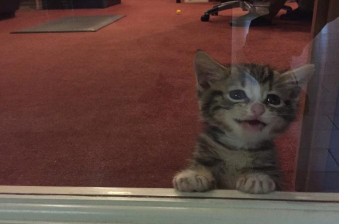 道路で1匹でさまよう子猫。一晩ですでに飼っている3匹と仲良しになりそのまま家族へ