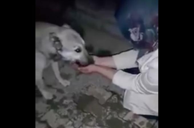 人間を警戒する野良犬に自らの手で水を与えた女性。そして野良犬のとった行動とは