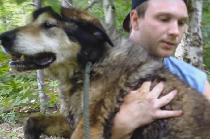 花火の音でパニックになり森に迷い込んだ1匹の老犬。奇跡的に飼い主と再会を果たす