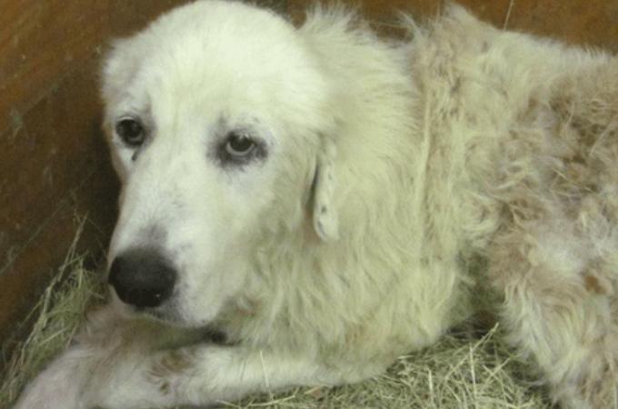 竜巻で亡くなった飼い主の腕の中にいたのは1匹の犬。そして新しい飼い主と出会い、悲しみを乗り越え始める
