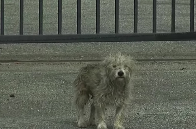 工場地帯に住み、人間を警戒する野良犬を保護。その後、新たな名前をもらい幸せを手にいれる