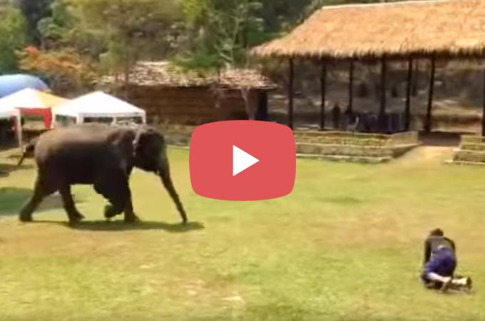 【動画】17年間お世話していた飼育員さんが襲われていると思い急いで駆け寄る像