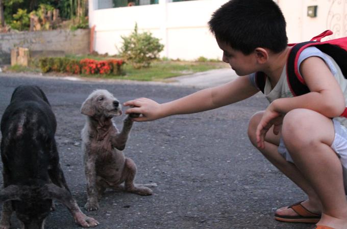 「野良犬たちを幸せににしたい」9歳の少年の願いが奇跡を起こす