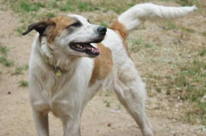 見た目の醜さから「悪魔」と呼ばれた野良犬。男性との出会いで天使へと変わる