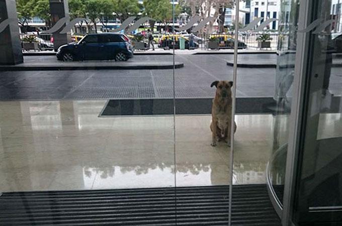 客室乗務員がフライトで訪れた海外でホームレス犬と出会い新しい家族に