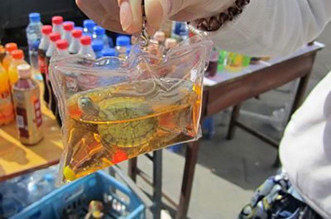 中国で発見された生きたままプラスチックキーホルダーにされた動物たち
