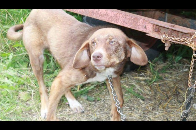 廃車となったトレーラーに鎖で繋がれ放置された子犬が発見される