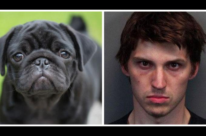 4匹の犬を斬首したネバダ州に住む男が懲役28年を言い渡される