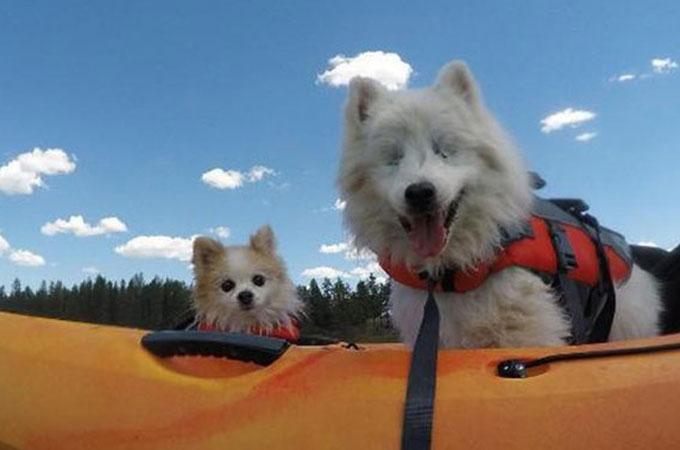 盲目の犬の目の代わりとなったのは親友の犬!助け合う姿に思わず感動