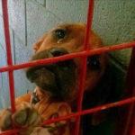 飼い主に放棄され殺処分を待つ犬の目からこぼれ落ちた涙のしずく