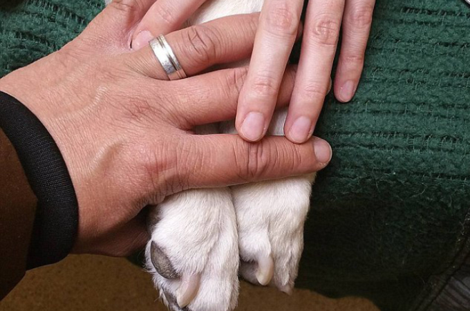 余命数日と宣告された犬が飼い主と冒険に!そこで起きた奇跡とは