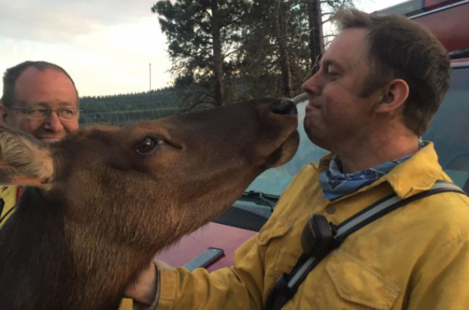 山火事の消化活動を終えた消防士たち一人一人に「ありがとう」とキスをして回るシカ