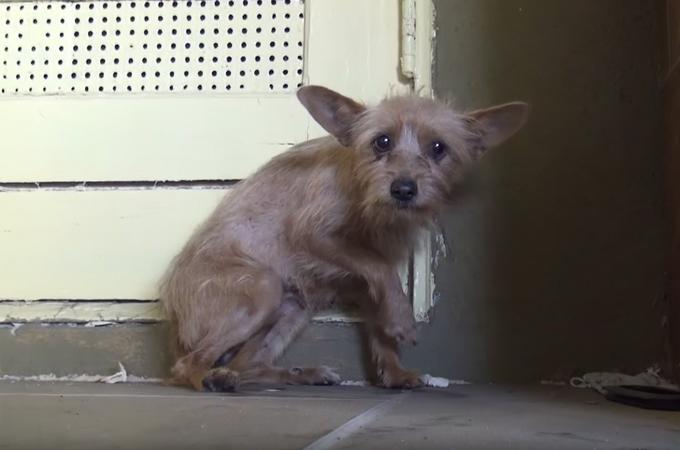 【動画】人間に警戒し怯える1匹の犬が保護され新しい飼い主と暮らすまでの動画で感じること