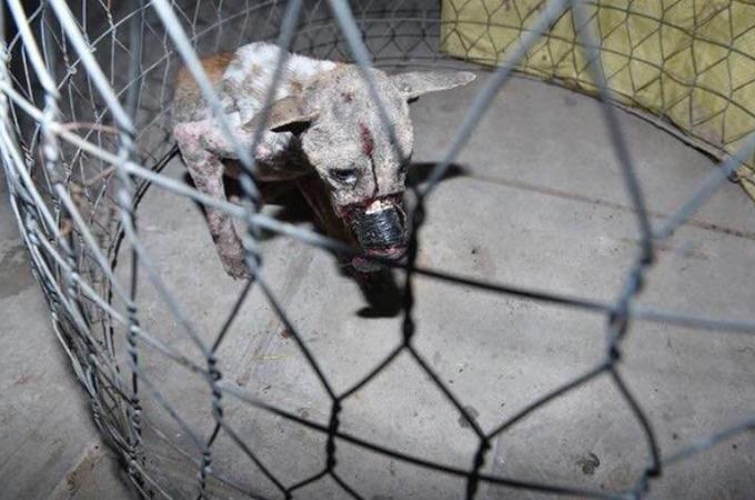 口の周りをテープで縛られ骨にまで食い込んでいた犬を保護。一命を取り留め徐々に心を開く