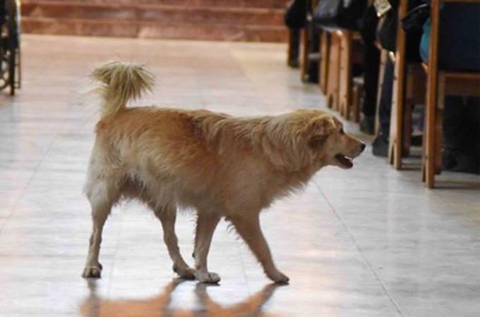 ペット同伴禁止の協会に侵入してきた1匹の犬。神父がその犬を追い出さなかった理由とは