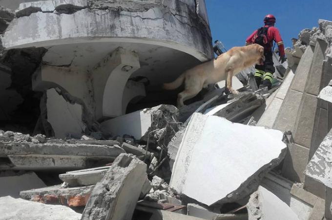 エクアドル地震で生き埋めになった7人を救った救助犬のダイコ。突然命を落とした原因とは