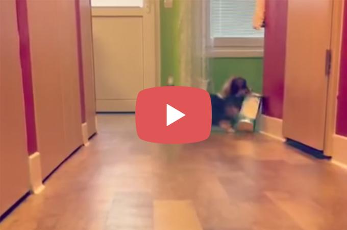 【動画】たった4秒のコーギーの行動に思わずほっこり!!