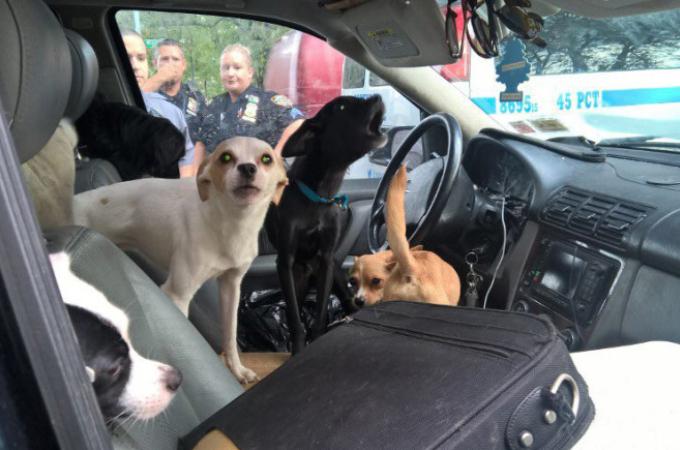 夏の車中から助け出された22匹もの犬たち。中には生後3、4ヶ月の子犬も