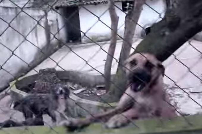 シェルター犬に飼い主を見つけることに情熱を注ぐフォトグラファー