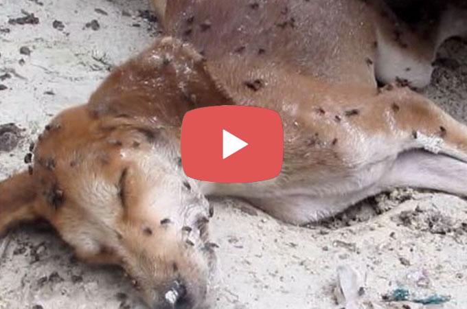 街角で一人死んでしまった野良犬の体にはハエが。しかしその後奇跡が!