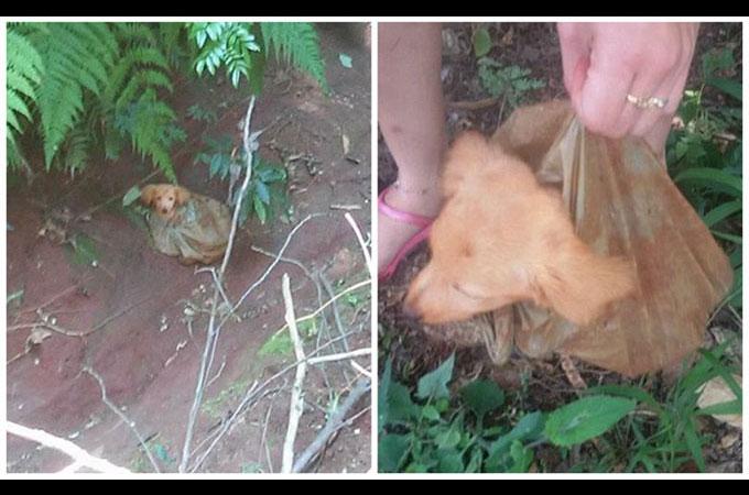 峡谷でビニール袋に入れられゴミのように捨てられた子犬が見つかる