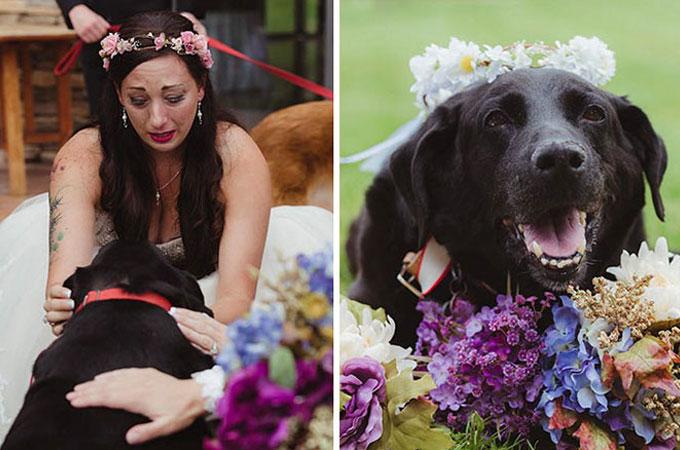 愛する飼い主さんの結婚式を見届けるまで命をつないだ愛犬チャーリー